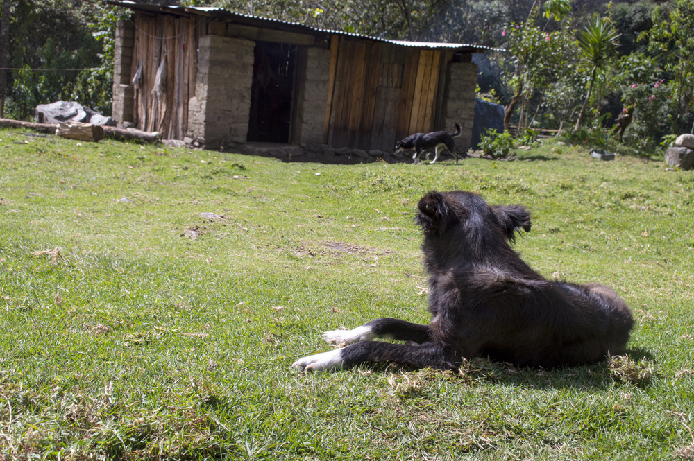 Inca 3 dog 1.jpg