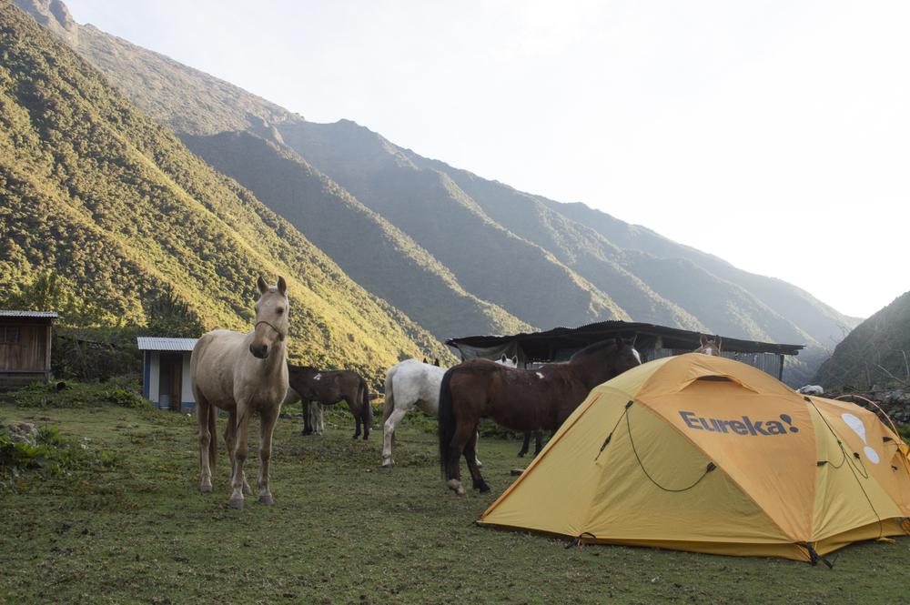 Inca 2 campsite and horses.jpg