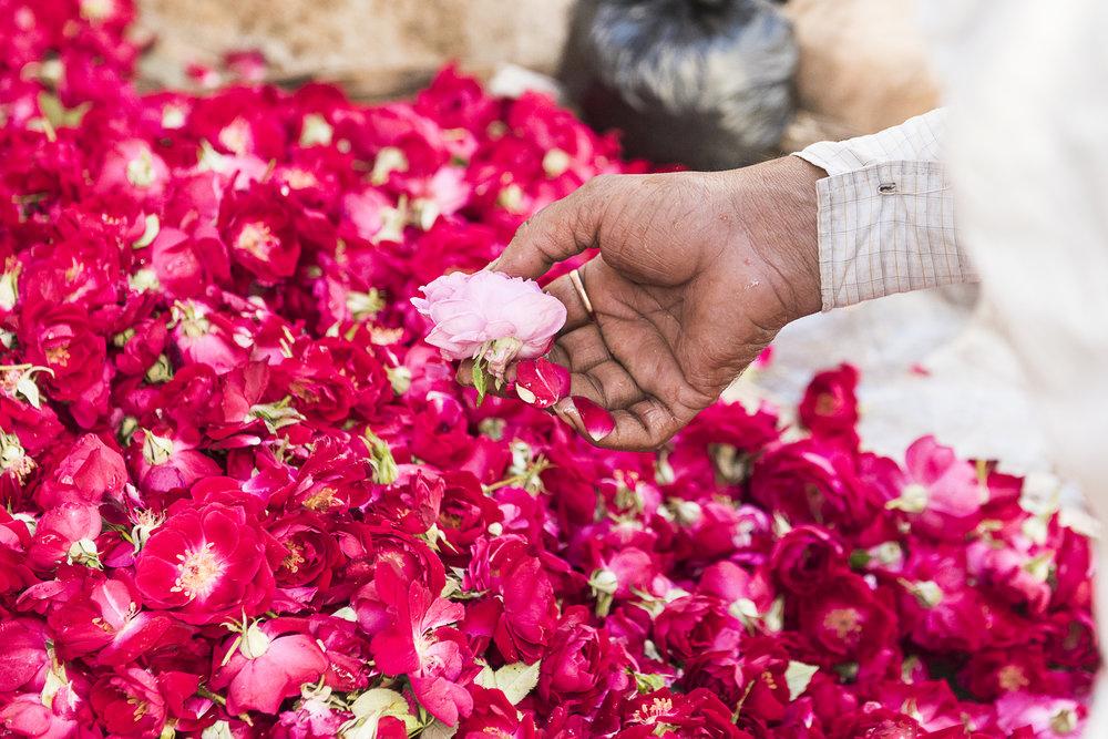 WHOA India 2016 - Photo credit Nicola Bailey - 342.jpg