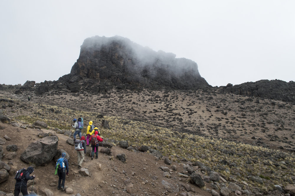 Kili3 hiking to lava tower.jpg