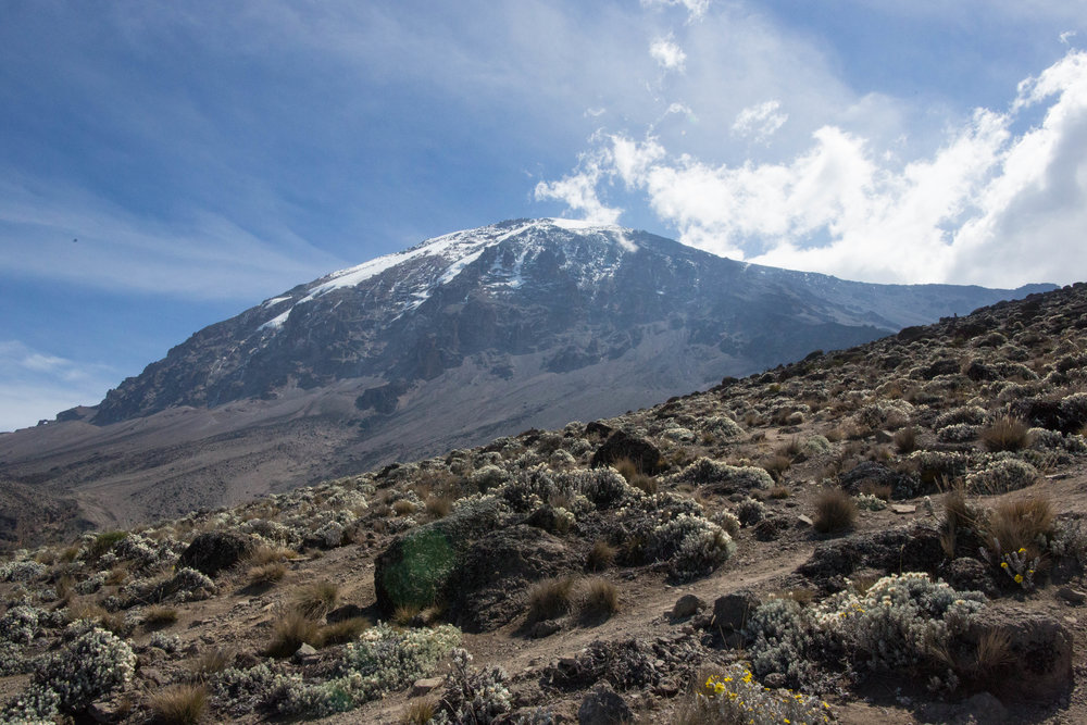 Kilimanjaro is the TALLEST free-standing mountain in the world. - It's also home to the highest peak in Africa: Uhuru Peak at 5,895 meters.