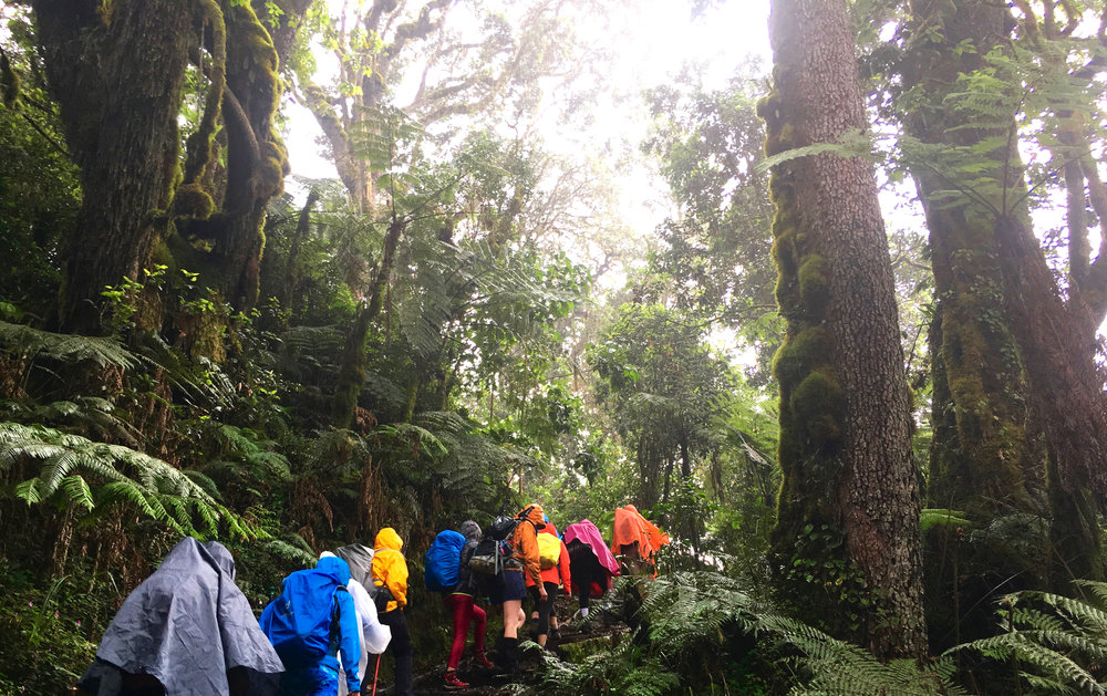 DAY 2:TWENDE! (aka LET'S GO!) - MACHAME GATE to MACHAME CAMPElevation: 1,800 - 3,000 mHiking Time: 5 - 7 hoursDistance: 11 km