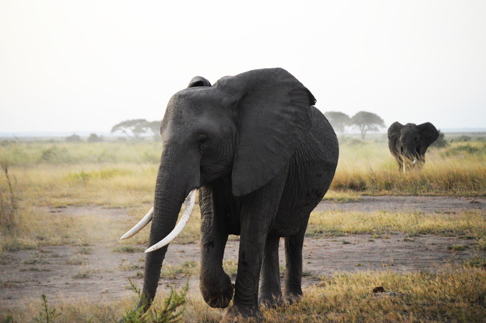 DAY 10:THE ELEPHANT OF SURPRISE - ARUSHA to TARANGIRE NATIONAL PARK