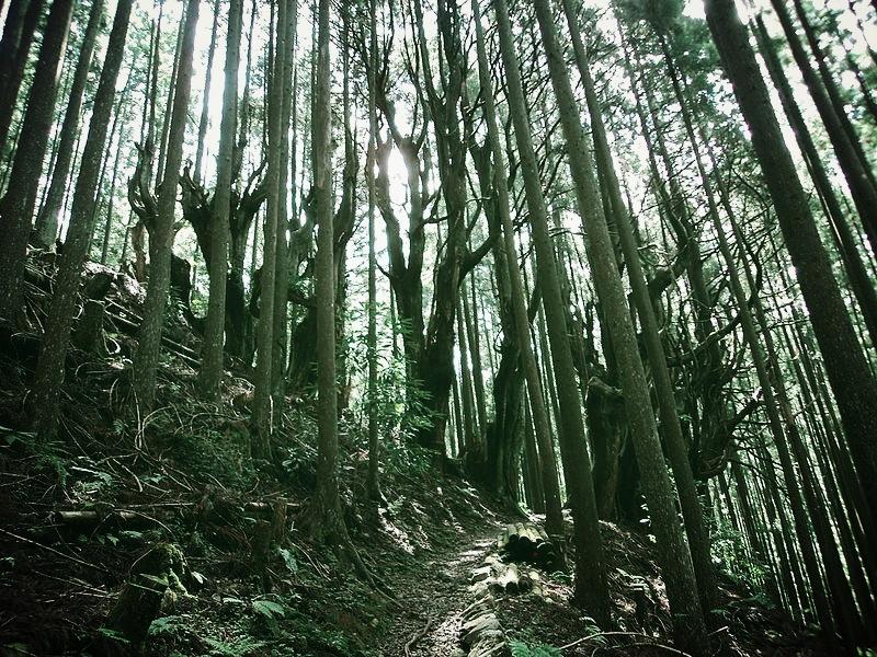 Kumano_Kodo_forest.jpg