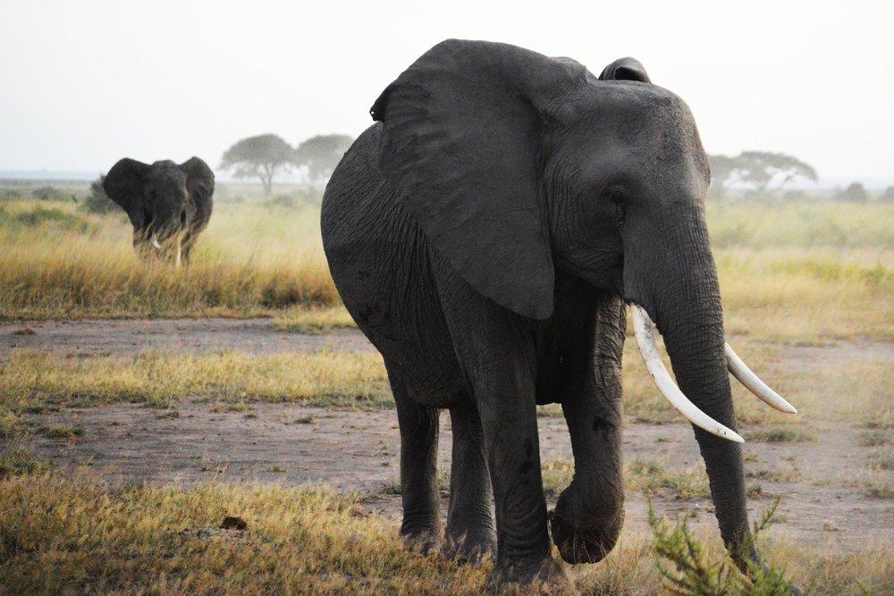 DAY 10:THE ELEPHANT OF SURPRISE - ARUSHA to TARANGIRE NATIONAL PARK
