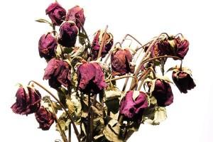 flowers-300x200.jpg