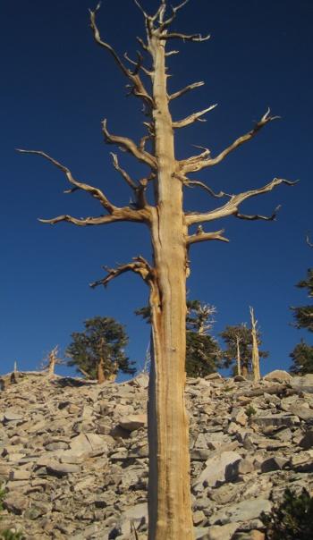 treesidebar_3.jpg
