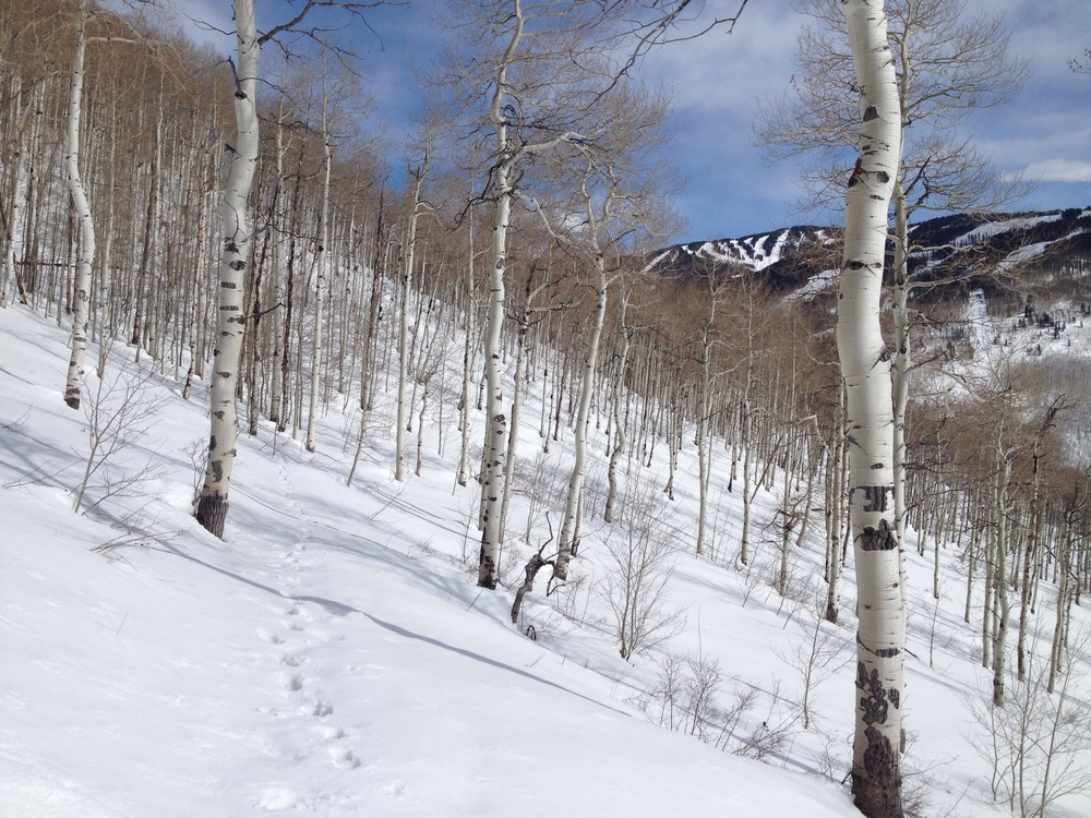 Lovely birch trees! Also, a partial view of Vail Mountain.
