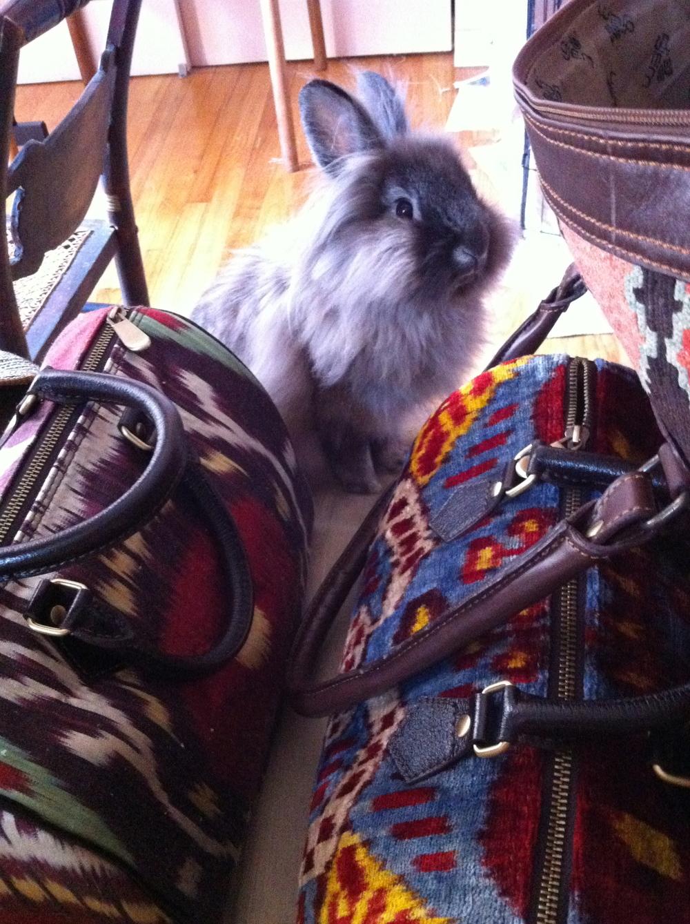 Silk Ikat and Velvet Ikat handbags
