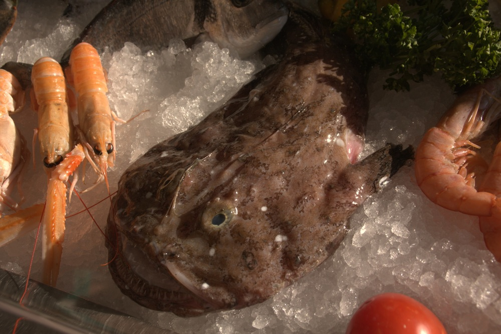 Monk Fish