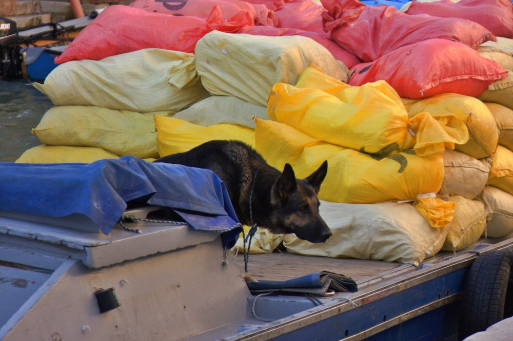 Dog on a Delivery Boat