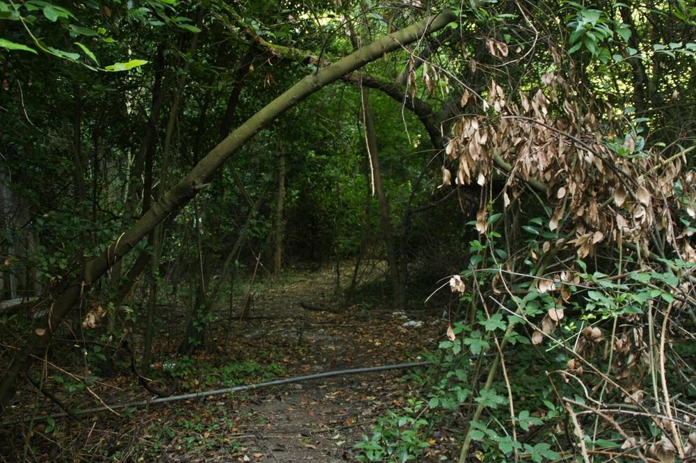 a path 2.JPG