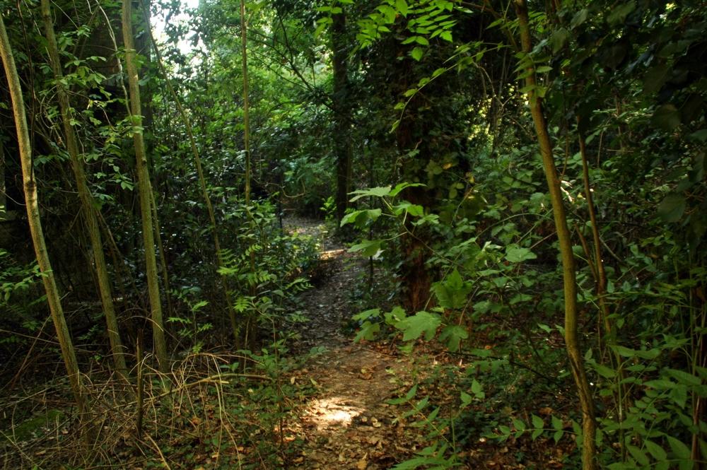 a path 3.JPG