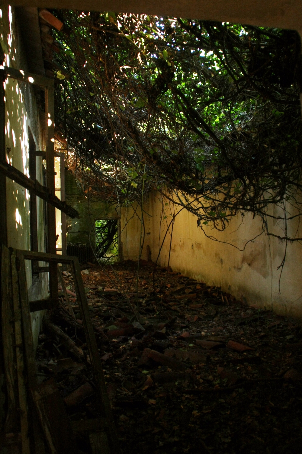 a path with vines.JPG