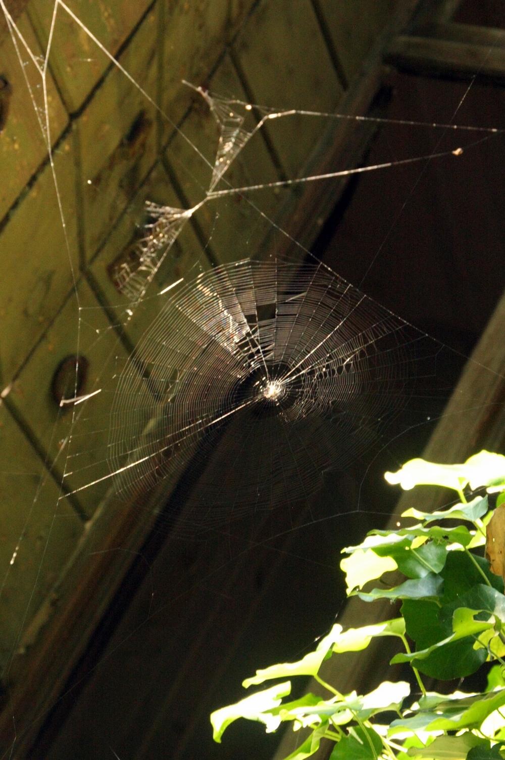 A web.JPG