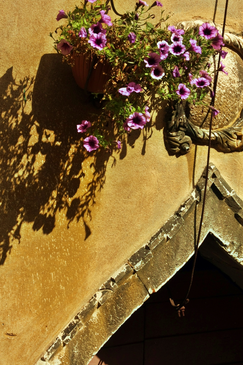 Flowers Above a Door