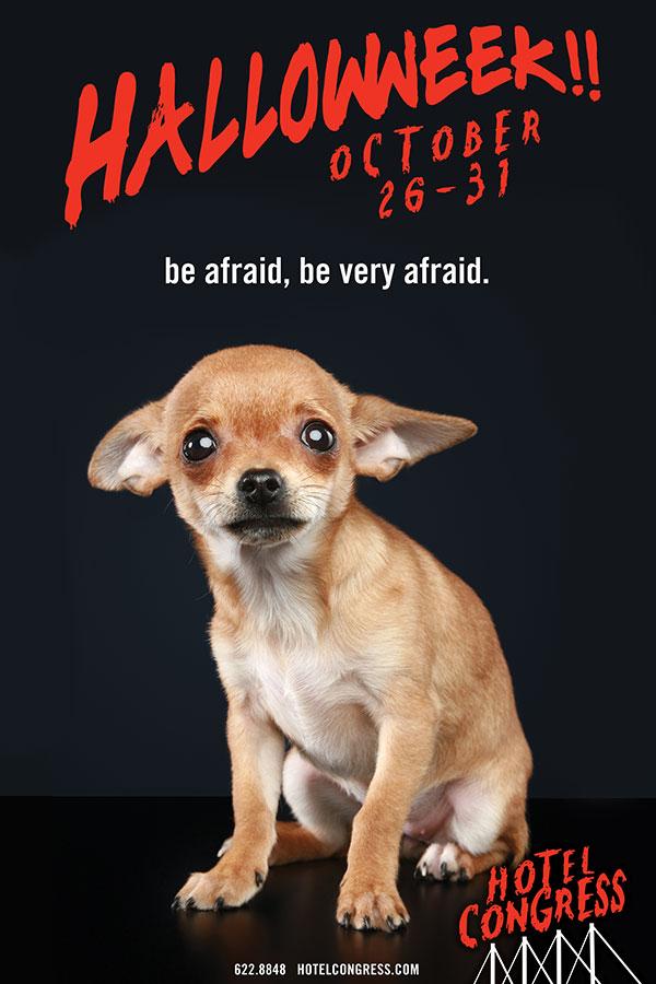 Haloweek-dog-website.jpg