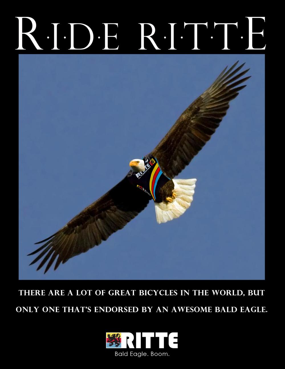 bald eagle yeah.jpg