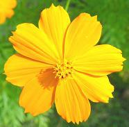 186x183yellowflower.jpg