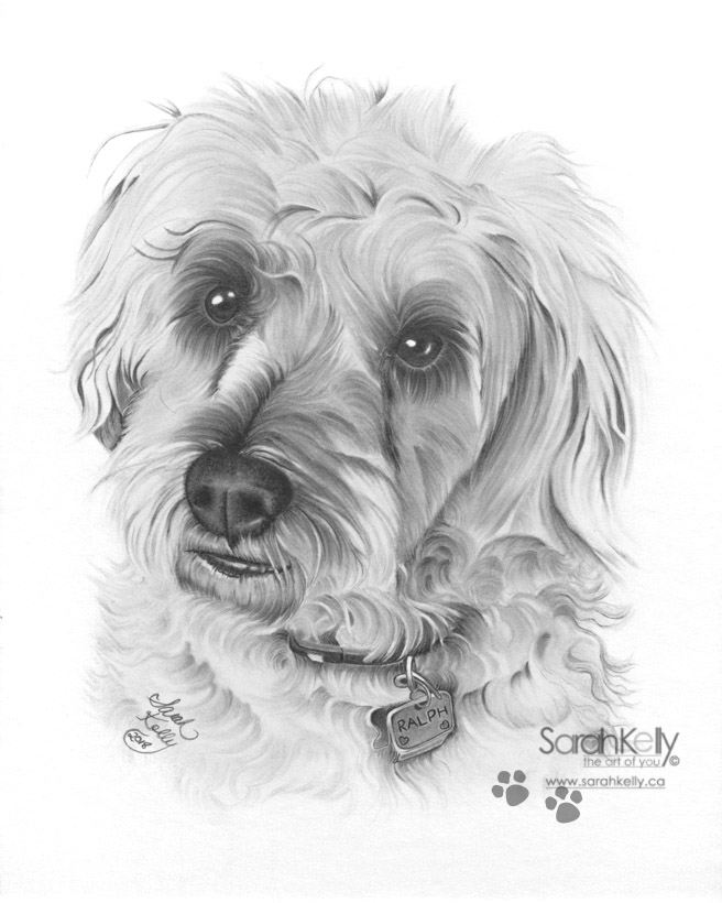 sarahkelly_pencil_portrait_drawings_petportraits_051.jpg