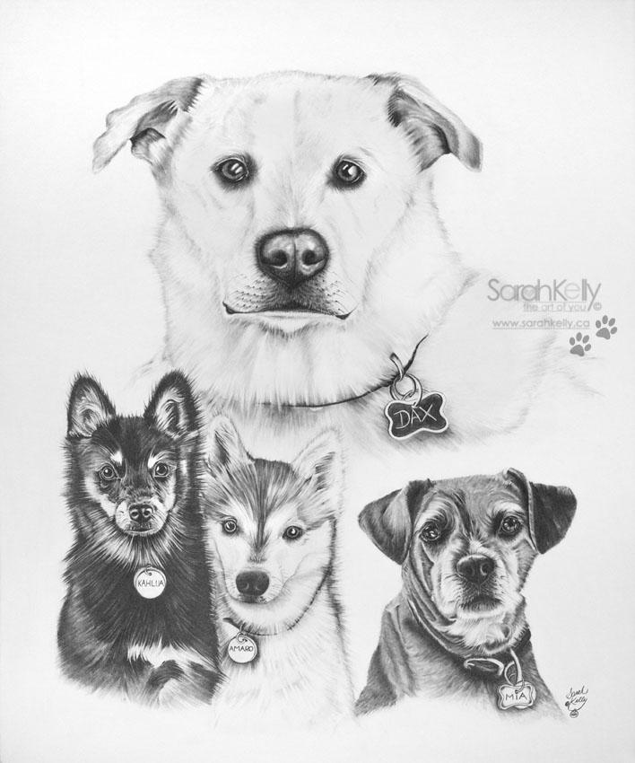 sarahkelly_pencil_portrait_drawings_petportraits_057.jpg