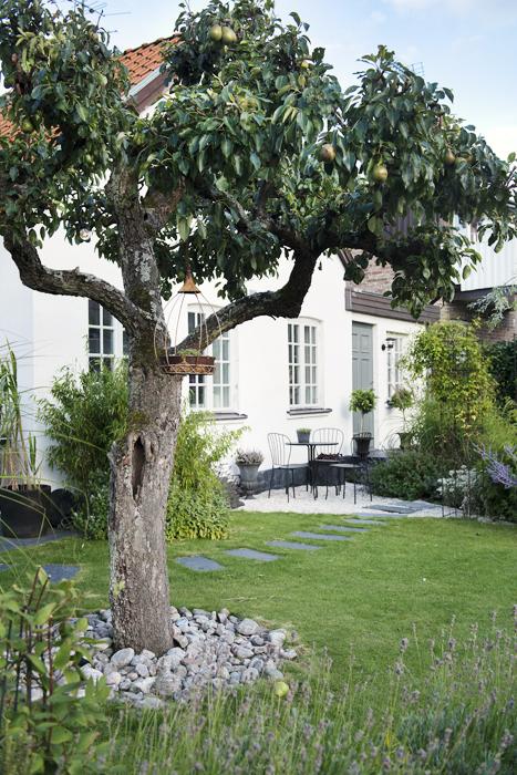 En underbar fruktträdgård omger Jannice Wistrands hem i Råå.