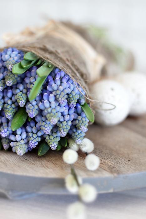 Pärlhyacinten med sin intensivt blåa färg. Foto: digsdigs.com