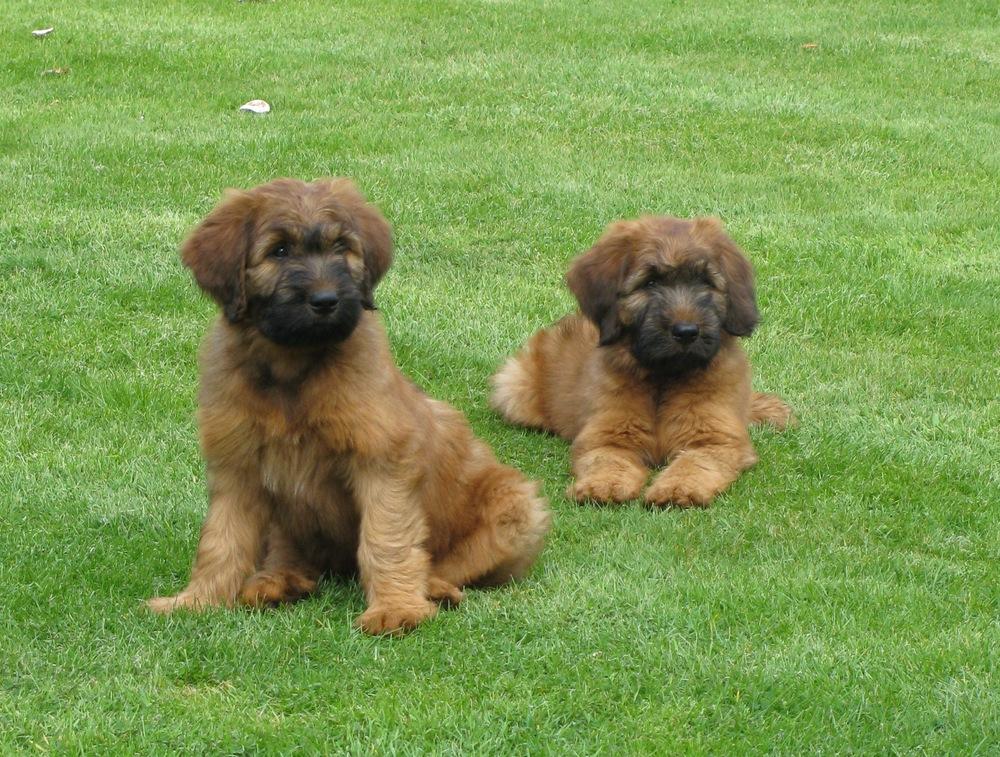 Buz&Maisie 10 weeks 003.jpg