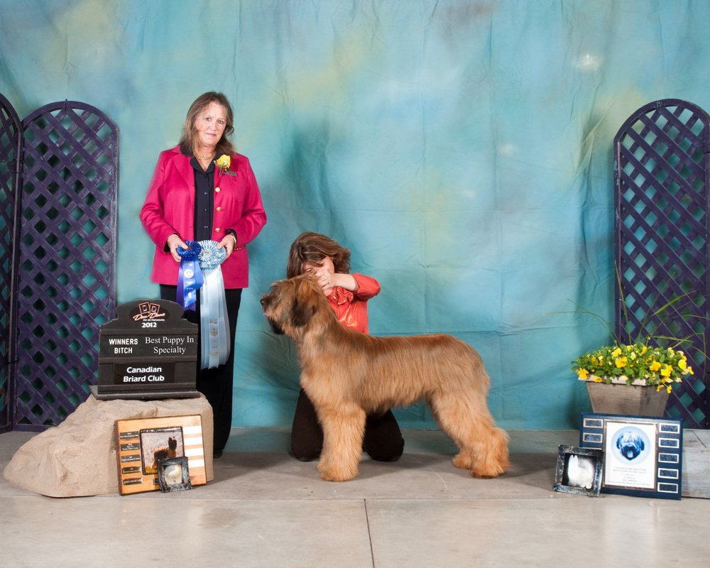 Best Puppy - Canadian Speciality 2012