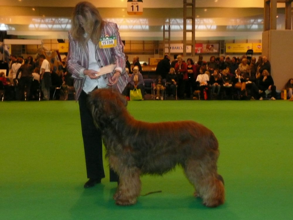 Winning his class at Crufts 08