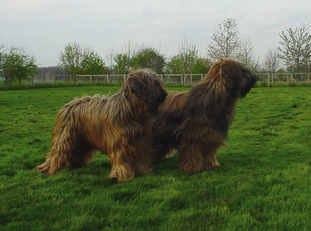April 2010 - Vastie and Ritz in the paddock