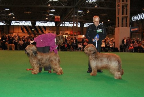 Ella 1st Limit Bitch Crufts 2013