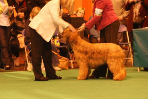 Maisie BP Crufts 2013