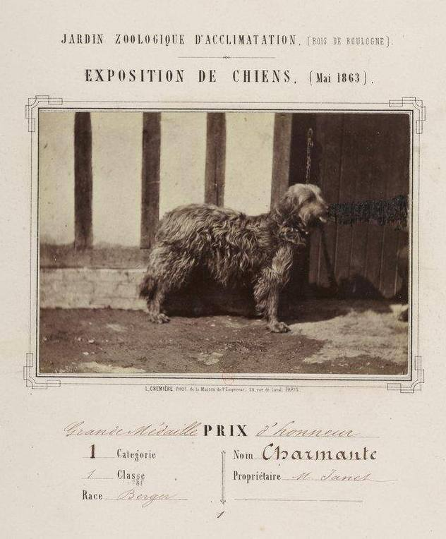 Earliest briard photo probably found 1863 Charmante.jpg