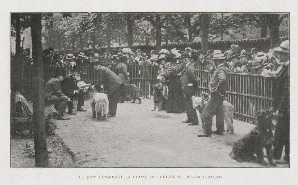 40eExhibition Canine de la Societe Central Canine 1910 - classe des chiens de berger francais.jpg