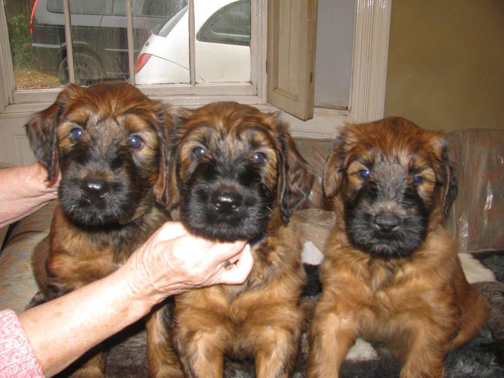 Ella x Dougal Pups 028.JPG