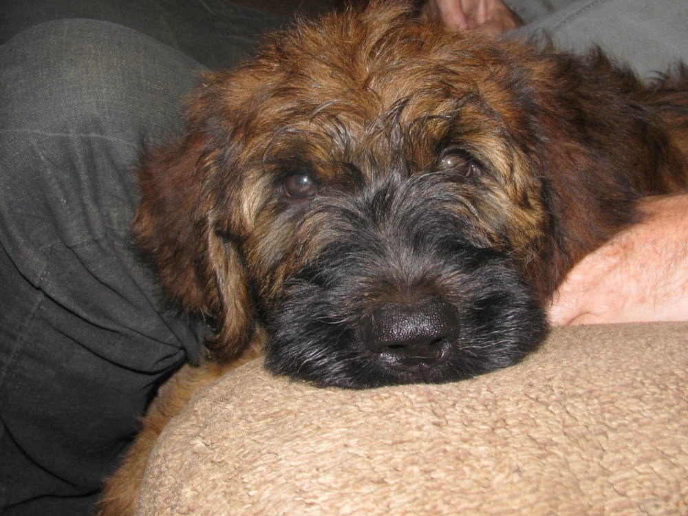 Ella x Dougal Pups 10 weeks 010.JPG
