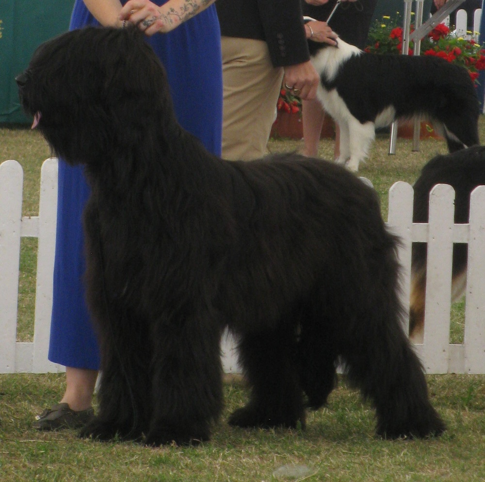 Beri Pup of the Year Windsor 2015 008b.JPG