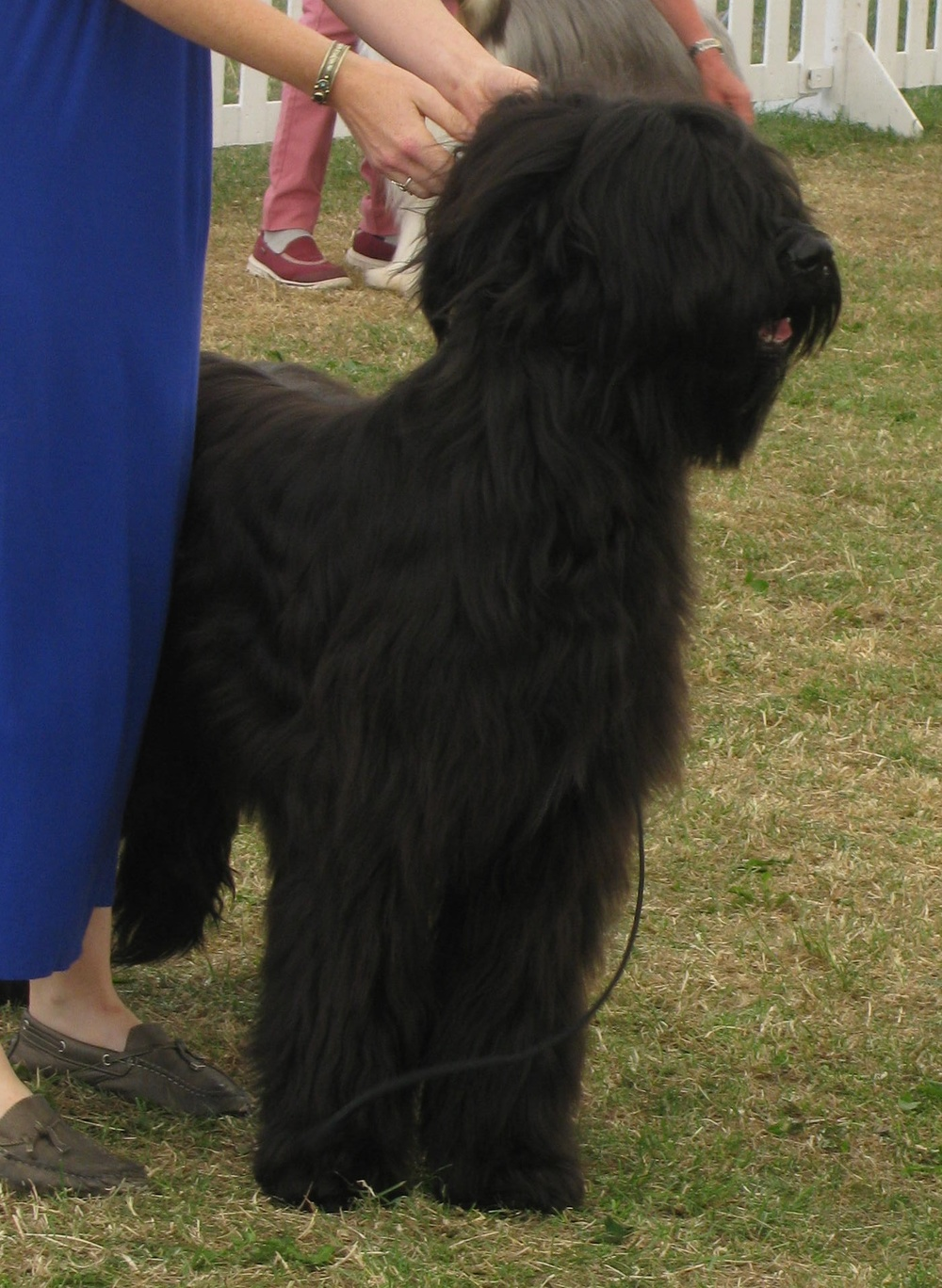 Beri Pup of the Year Windsor 2015 005b.JPG
