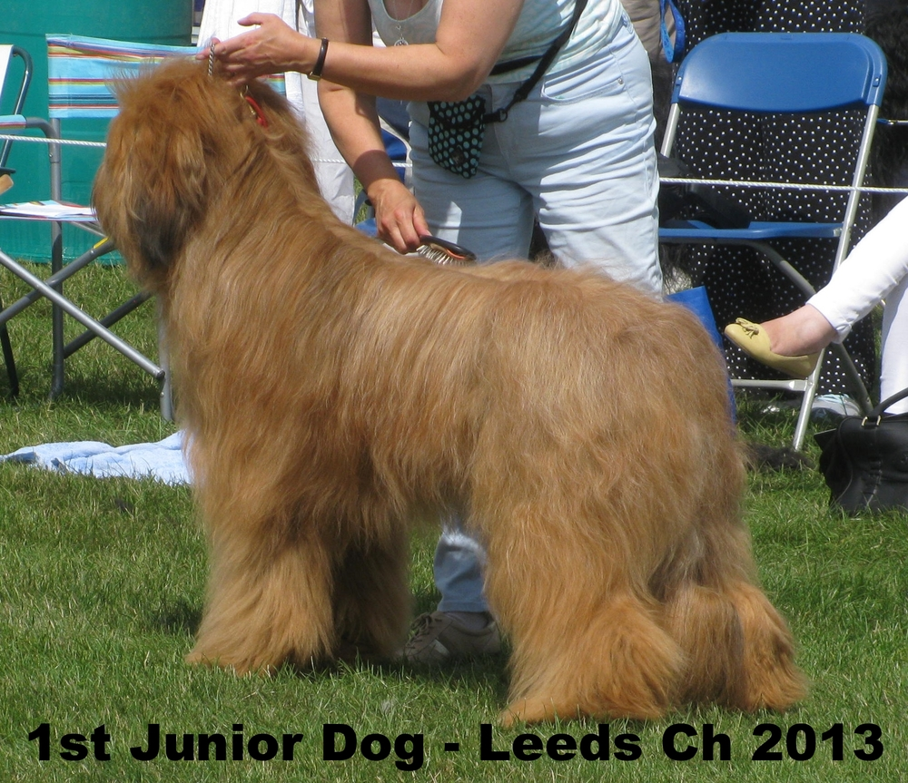 1st Junior Dog - Leeds July 2013.JPG