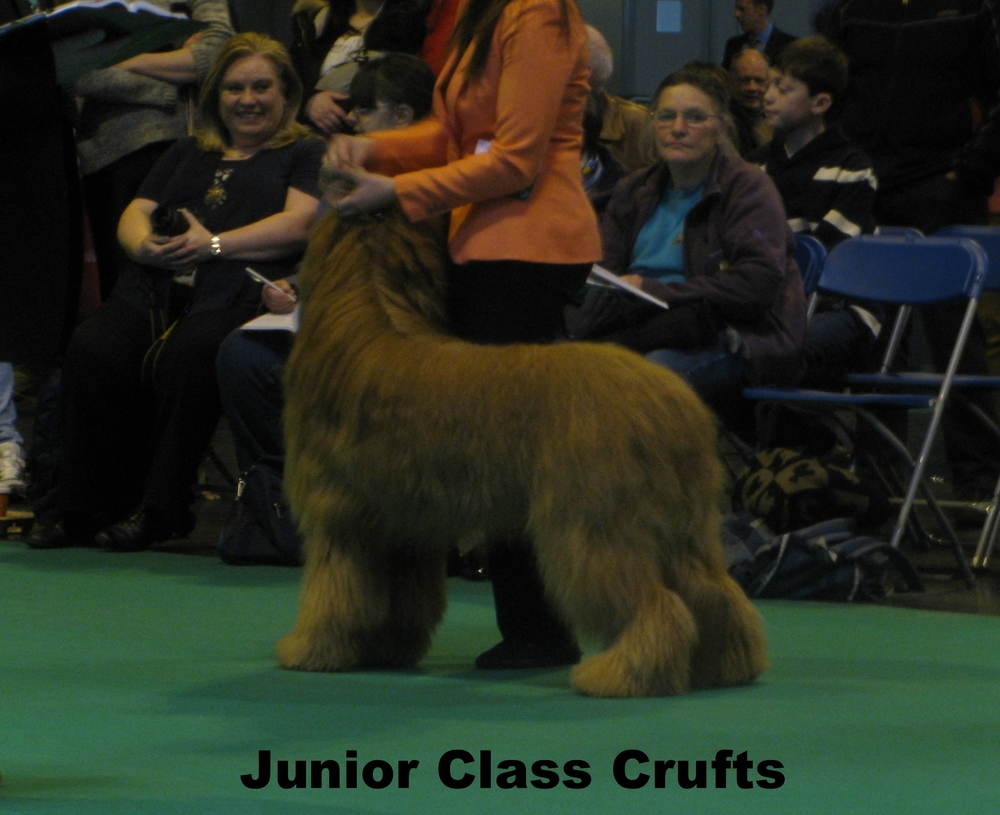 Buzz Crufts 2013.JPG
