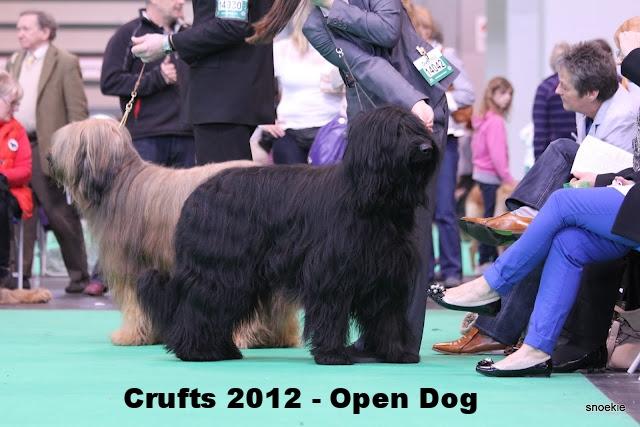 Mitch+Crufts+2012 Open Dog Class.jpg