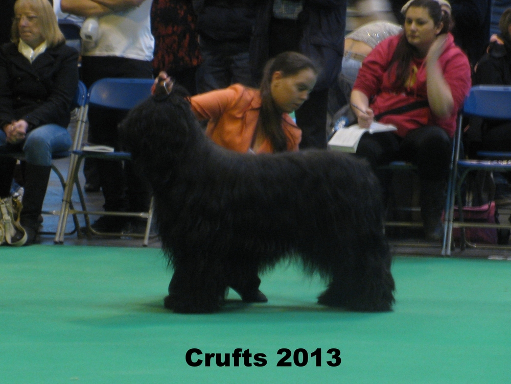 Mitch Crufts 2012.JPG