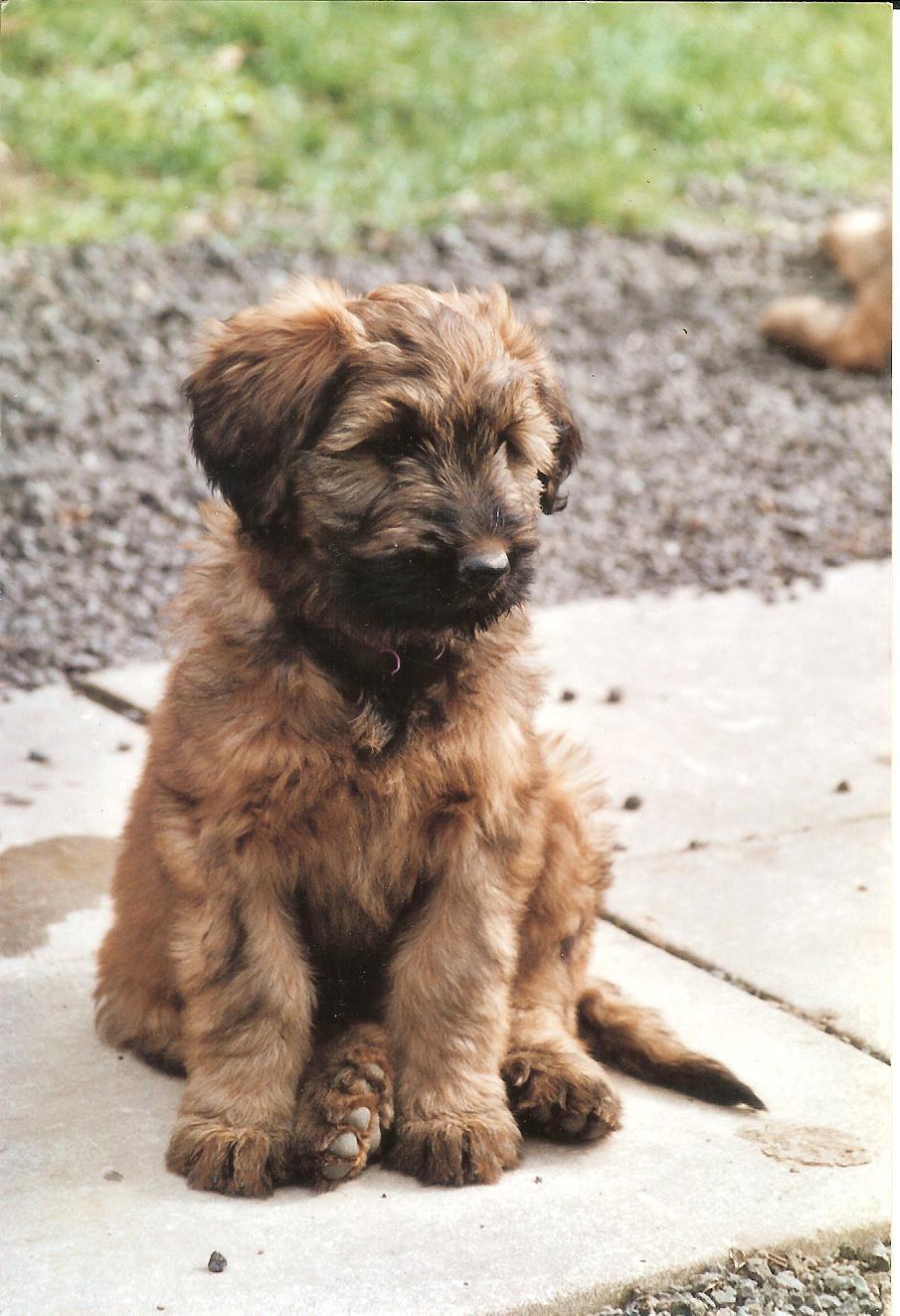 Vastie Pup 001.jpg