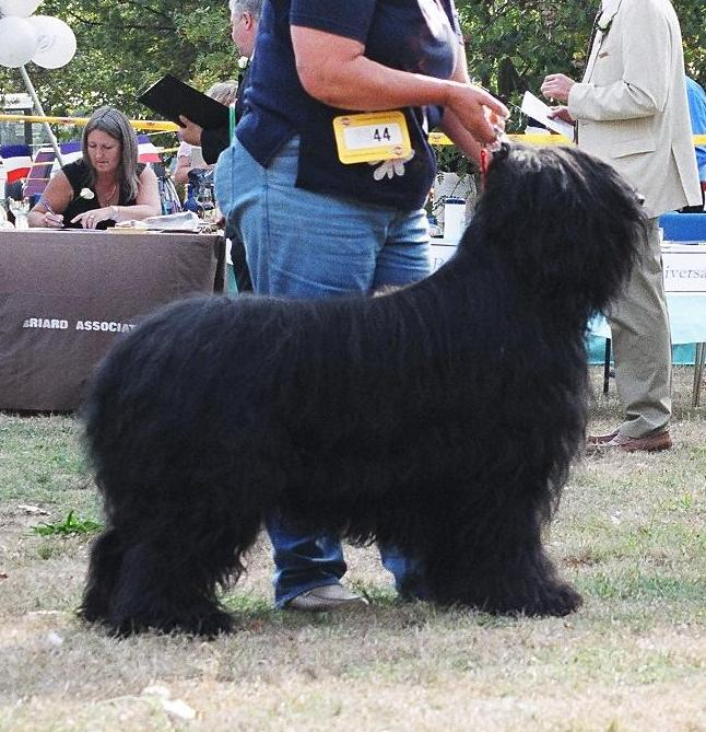 Matt Best Dog Club Ch Show.jpg