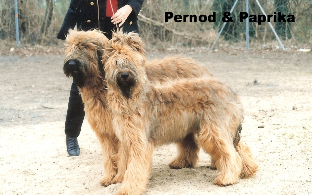 Pernod & Paprika Montlucon.jpg