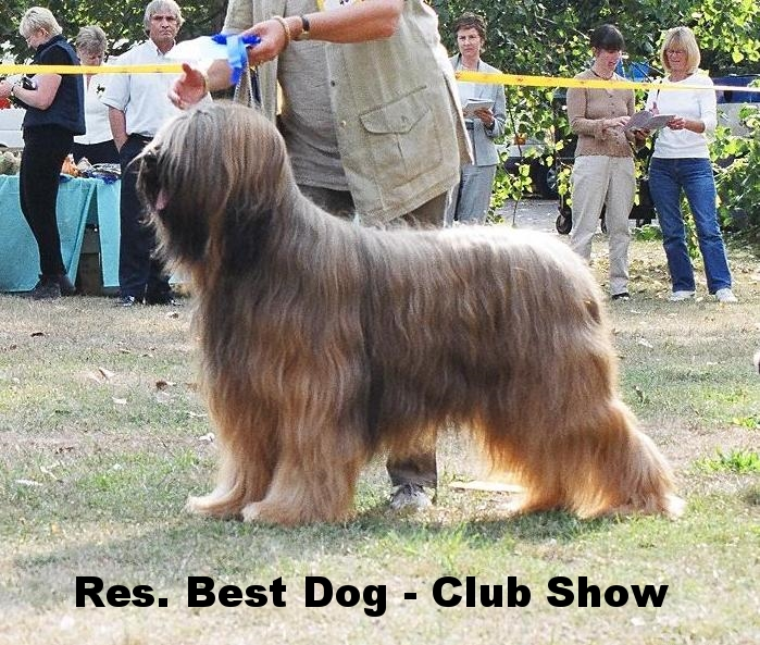 Pernod RB Dog Club Ch Show.jpg