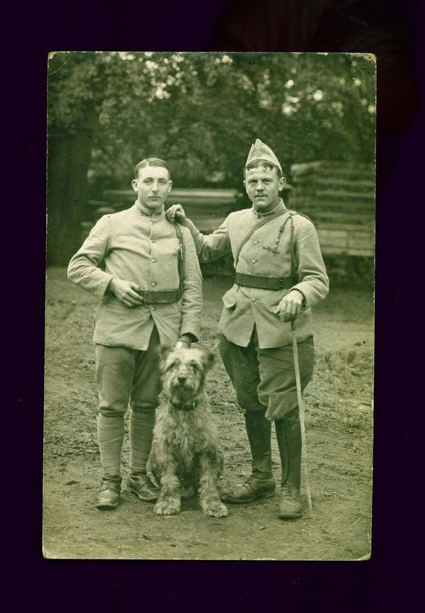 War Service Briard.jpg