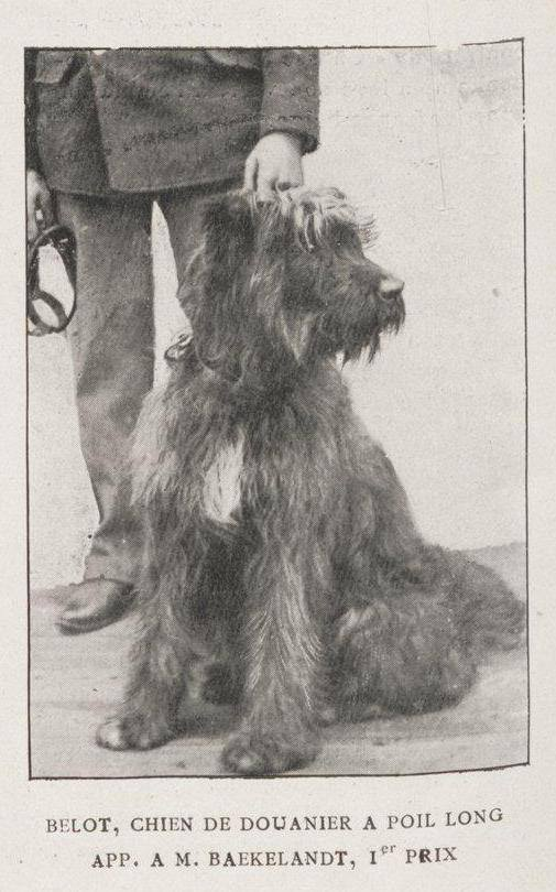1903 Belot Chien de Douanier . AM Baekelandt, 1st prize.   Border patrol dog.jpg