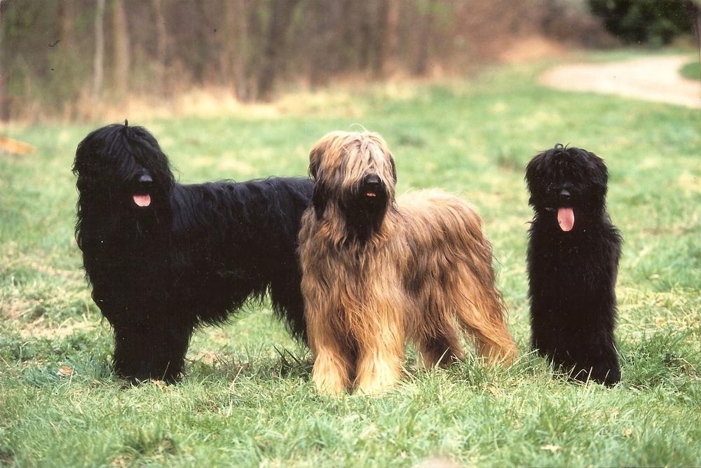 Ettie, Mat, Ixa.jpg